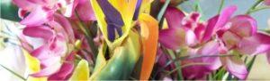 Decoração e Cardápio Festa Tropical